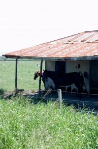 Derelict cabin - Cabin - FNQ rural architecture