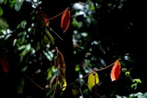 Ma:Mu Rainforest Walkway