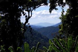 Ma:Mu Rainforest Canopy Walkway