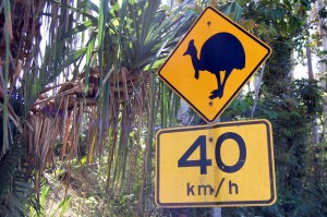 Beware Of Speeding Cassowaries
