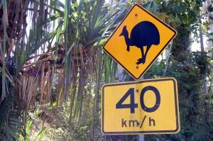 Beware Of Speeding Cassowaries