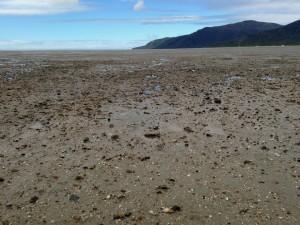 cairns beach mudflats